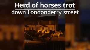 Horses spotted trotting down Londonderry street [Video]