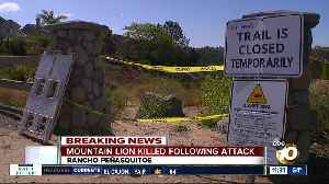 Mountain lion killed following attack [Video]