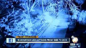 15 Mountain Lion Attacks from 1986 to 2014 in CA [Video]