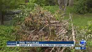 Homeowners struggle to get rid of tree limbs after spring storms [Video]