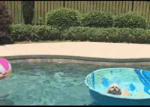 'He's Good!' - Dog Plays Water Volleyball With His Owner [Video]