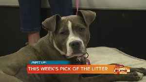 PICK OF THE LITTER: Moxie [Video]