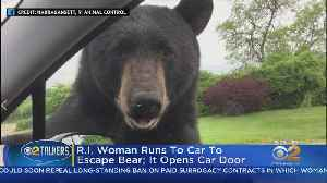 R.I. Woman Runs To Car To Escape Bear, Animal Opens Car Door [Video]