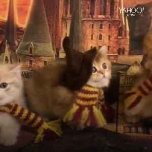Harry Paw-ter kittens are adorable [Video]