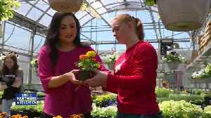 Partners in Education: Greenhouse keeps students close to nature [Video]