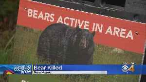 Wildlife Officers Euthanized Bear Suspected In Attack On Hiker [Video]