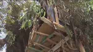 Transients Living In Tree Houses [Video]