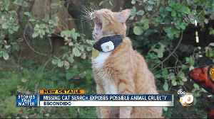 Missing cat search exposes possible animal cruelty case [Video]