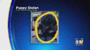 3 Suspects Wanted For Stealing Bullmastiff Puppy In Fort Worth [Video]