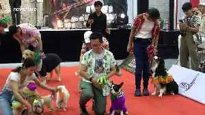 Colourful scenes from dog fashion show in Bangkok [Video]