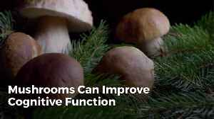 Mushrooms May Protect Your Brain [Video]