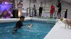 Dogs make a splash in diving competition at Thai pet show [Video]