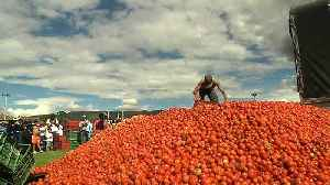 Watch: Locals paint the town red in Colombia tomato throwing festival [Video]