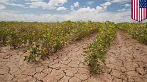Global food production is already being affected by climate change [Video]
