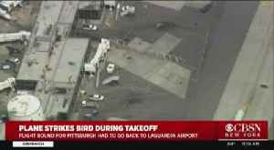 Plane Lands In LGA After Bird Strike [Video]