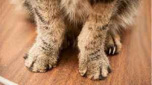 New York Closer To Banning Cat Declawing [Video]
