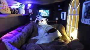 """Dog Lover Builds """"Man Cave"""" For Beloved Rescue Dog Complete With Mood Lighting And A Roof GardenDog Lover Builds """"Man Cave [Video]"""