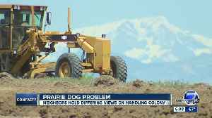 Neighbors at odds over prairie dog colony and new development in Weld County near Broomfield [Video]