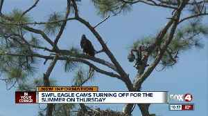 Southwest Florida Eagle Cam going down for the summer [Video]