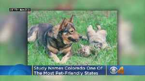 Colorado Is One Of The Most Pet-Friendly States, Study Finds [Video]