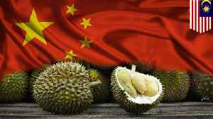 Malaysia is cashing in on Chinese durian craze [Video]