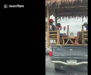 Bizarre moment pet dog and 4 men ride in bamboo hut on wheels [Video]