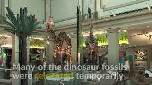 New Smithsonian fossil exhibit links prehistoric life to the present [Video]