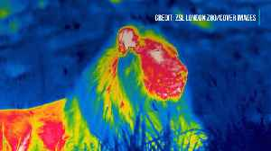 Zoo Creates Amazing Thermal Images [Video]