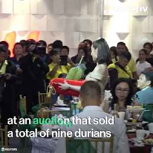 A Thai Businessman Paid Nearly $50k for a Durian, the Fruit so Stinky Some Dogs Won't Even Eat it [Video]
