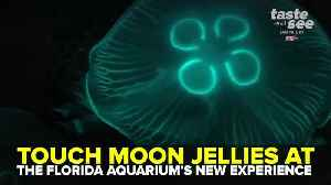 Touch moon jellies at The Florida Aquarium's newest exhibit | Taste and See Tampa Bay [Video]