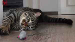 NY House Passes Feline-Friendly Bill That Would Outlaw This Procedure [Video]