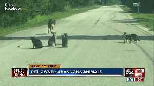 Woman caught on camera dumping 10 cats, elderly dog on side of the road in Ruskin [Video]