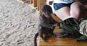 Rescued baby baboon will melt your heart! [Video]