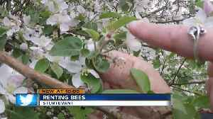 Apple orchard rents bees to promote plentiful growing season [Video]