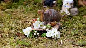 British photographer makes tiny village for mice [Video]