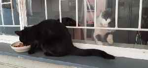 Jealous kitten tries to attack stray cat behind closed window [Video]
