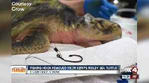 Vets remove fish hook from sea turtle's mouth [Video]