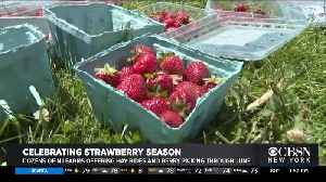 Rutgers University Helping Area Farmers As Strawberry Season Kicks Off [Video]