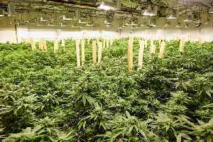 Government Software Giant Accela Partners with CloudPWR to Create Cannabis Regulatory Solution [Video]