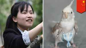News video: Chinese woman earns $4,000 a month making bird nappies