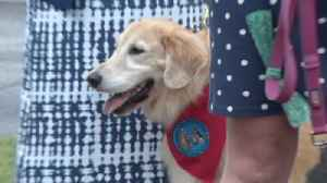 Therapy dogs on hand for public memorial service at Rock Church in Virginia Beach [Video]