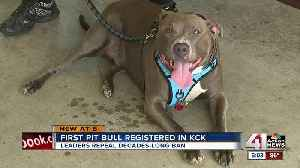 Pit bulls now being registered, adopted in KCK [Video]