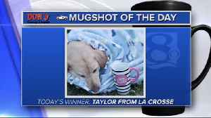 Mug shot of the day - 6/7/19 - Taylor from La Crosse [Video]