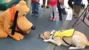 This Guide Dog Had The Most Amazing Reaction To Meeting Pluto [Video]
