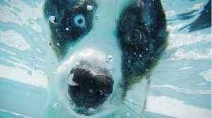 Pool Safety Tips For Your Furry Dog Friends [Video]