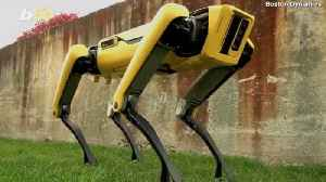 Boston Dynamics' Animal-Like 'Spot' Robot Will Soon be Available for Purchase [Video]