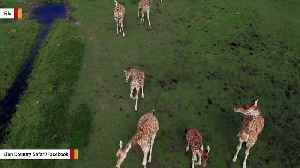 Lightning Kills Two Giraffes At Florida Wildlife Park [Video]