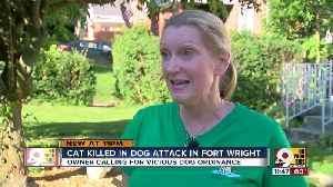 Cat killed in dog attack in Fort Wright [Video]