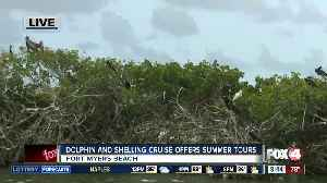 Island Time Dolphin and Shelling Cruises run private tours [Video]