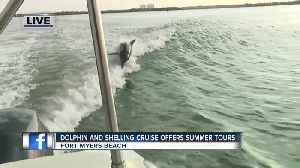 Island Time Dolphin and Shelling Cruises run private tours near Fort Myers Beach [Video]